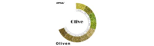 Midi-S Olive Scale